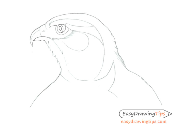 Hawk head details drawing and shading