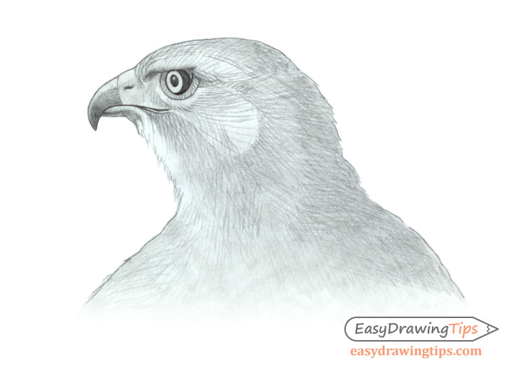 Hawk head refined shading