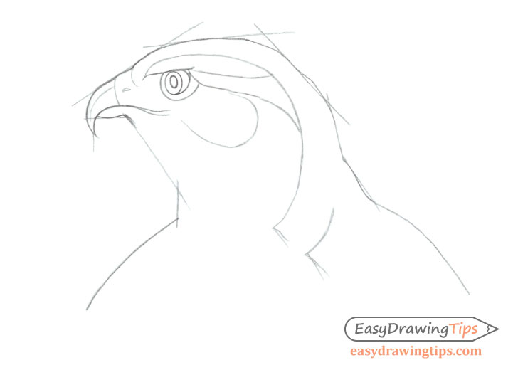 Hawk head shape drawing