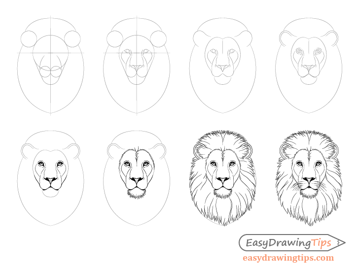 How To Draw Lion Face Head Step By