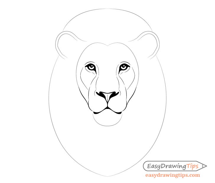 Lion facial features details drawing
