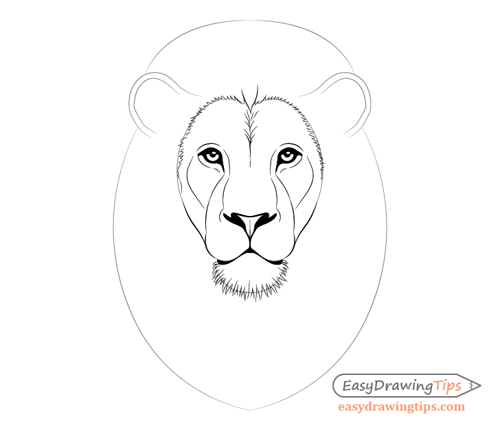 How to Draw Lion Face & Head Step by Step - EasyDrawingTips