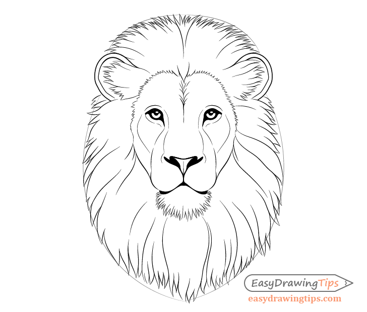 Male Lion Outline – Royalty free clipart illustration of an outlined grinning male lion, on a white background.
