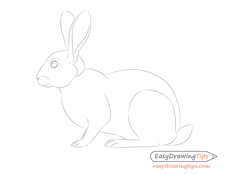Rabbit details drawing