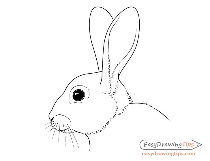 Rabbit face drawing