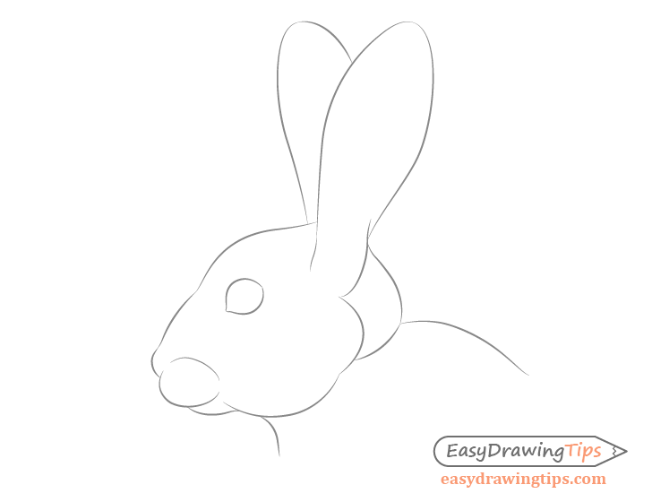 Rabbit facial features drawing