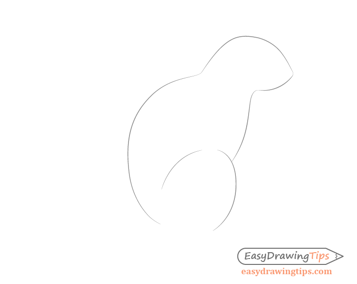 Squirrel body drawing side view
