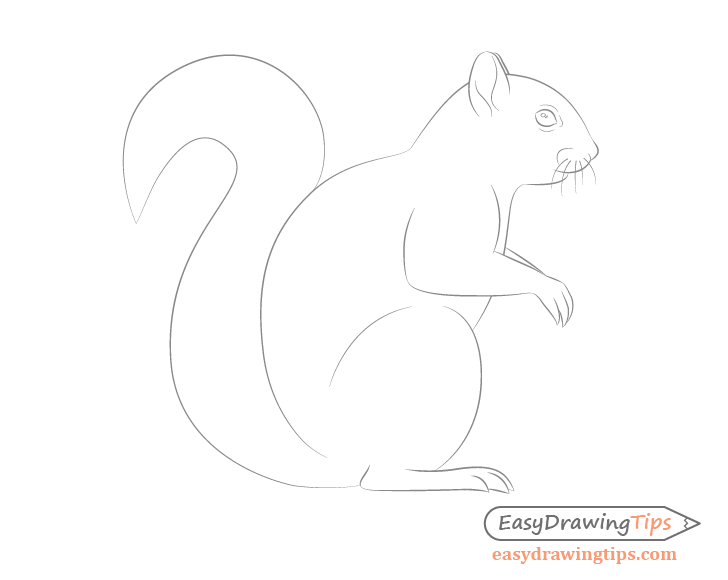 Squirrel details drawing side view
