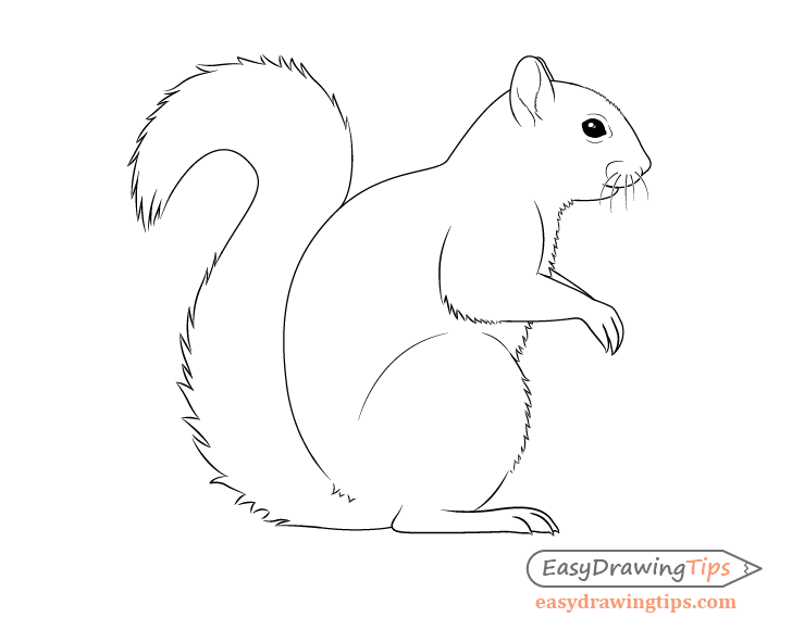 Squirrel drawing side view