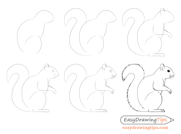 Squirrel drawing step by step side view