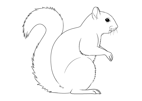 Squirrel drawing tutorial