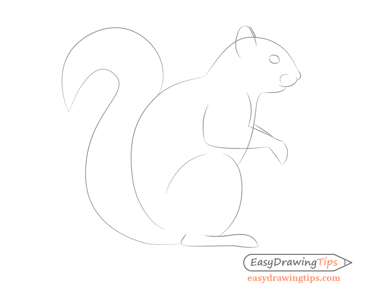 Squirrel facial features drawing side view