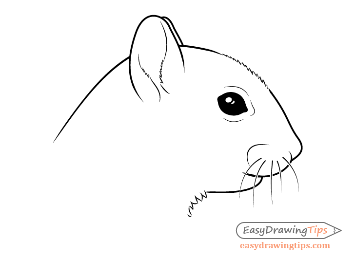 Squirrel head drawing side view