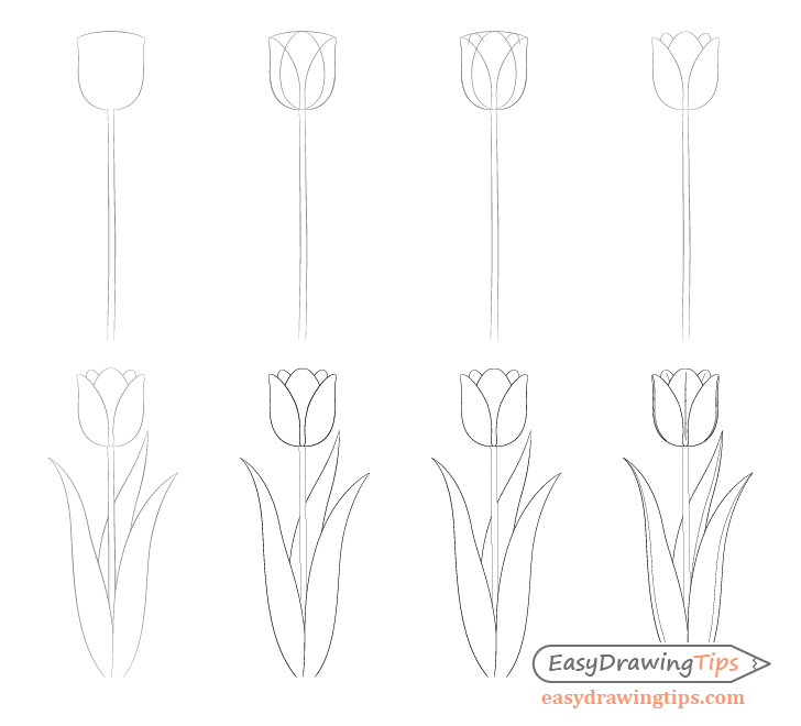 Easy Tulip Drawing Step By