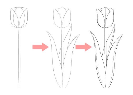 Tulip drawing tutorial