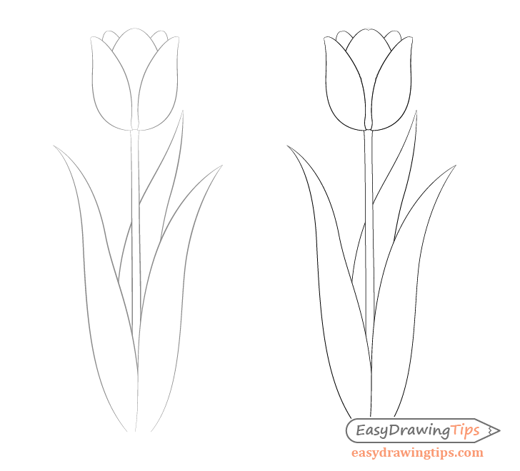 Tulip leaves and curves drawing