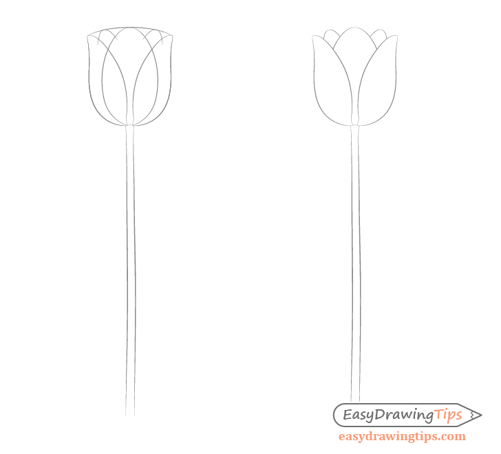 Tulip petals drawing