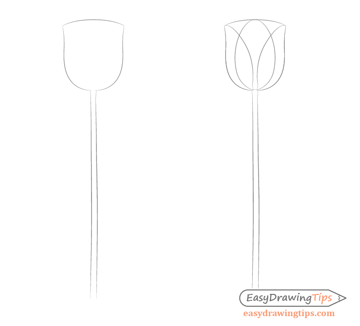 Tulip shape drawing