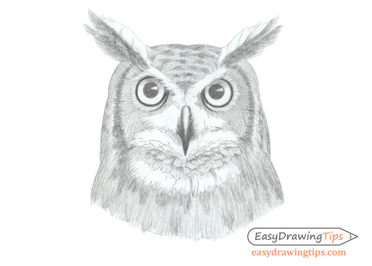Owl face drawing shading