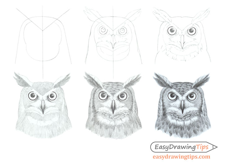 Owl face drawing step by step