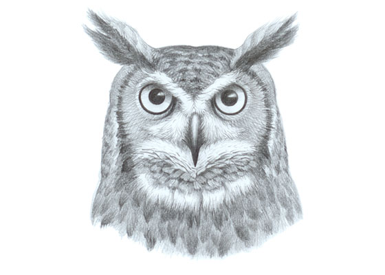Owl face drawing tutorial