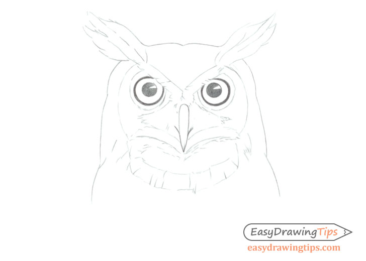 Owl face line drawing