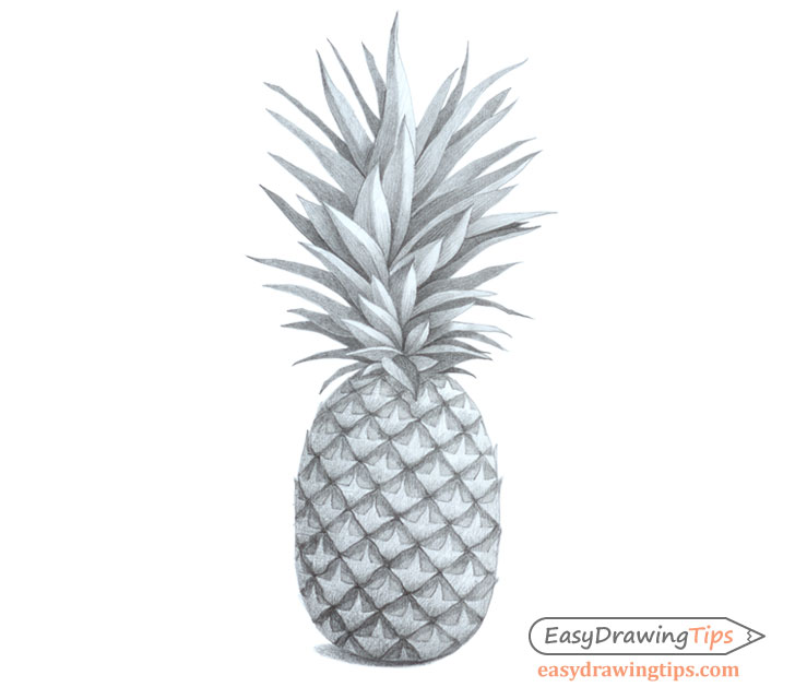 Pineapple shaded drawing
