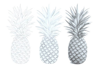 How to Draw a Realistic Pineapple Step by Step