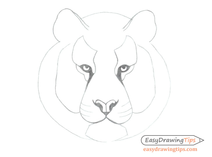 Tiger face basic line drawing
