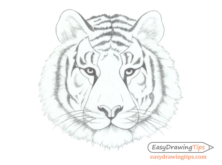 Tiger face drawing basic shading