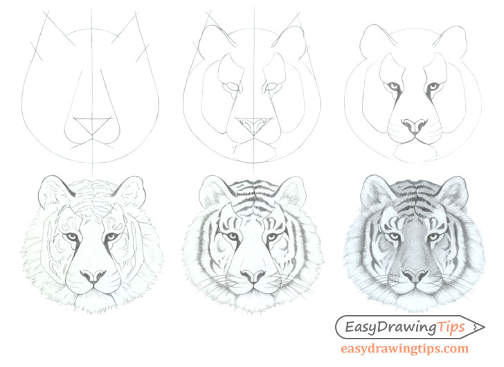 Tiger face drawing step by step