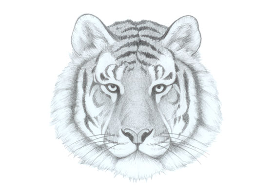 Tiger face drawing tutorial