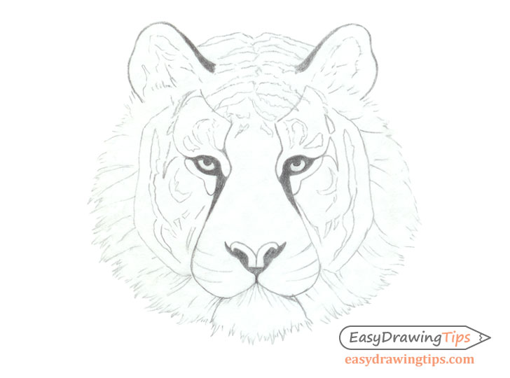 How to Draw a Tiger Face & Head Step by Step - EasyDrawingTips