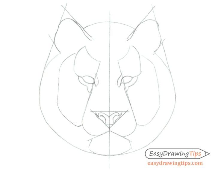 Tiger facial features drawing