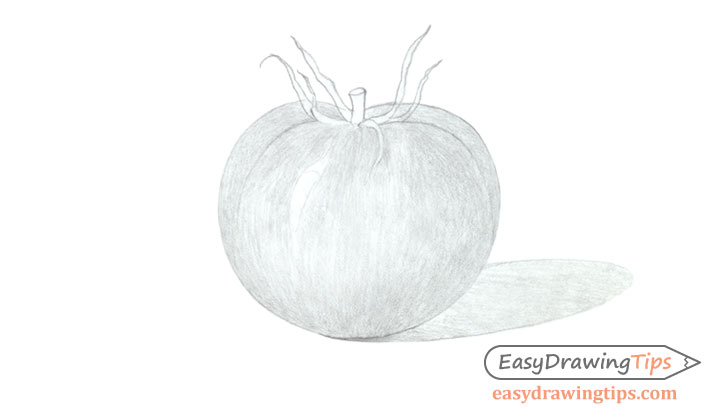 Tomato drawing basic shading