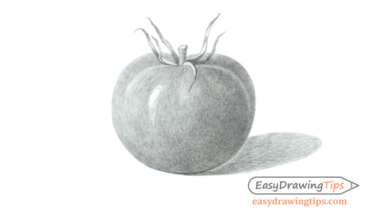 Tomato drawing shading
