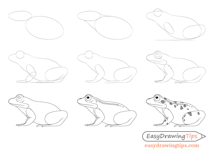 Frog drawing step by step