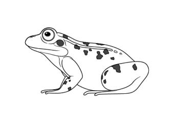 Frog drawing tutorials