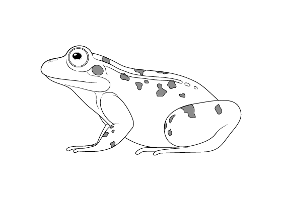 Frog drawing tutorials