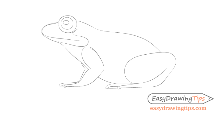 Frog full body details drawing