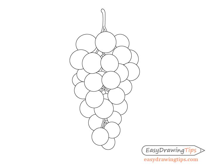 Grape bunch drawing