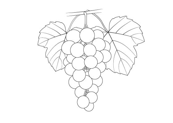 Grape drawing tutorial