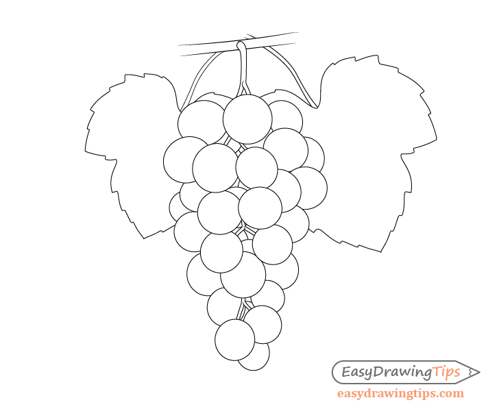 Grapes with leave outlines drawing