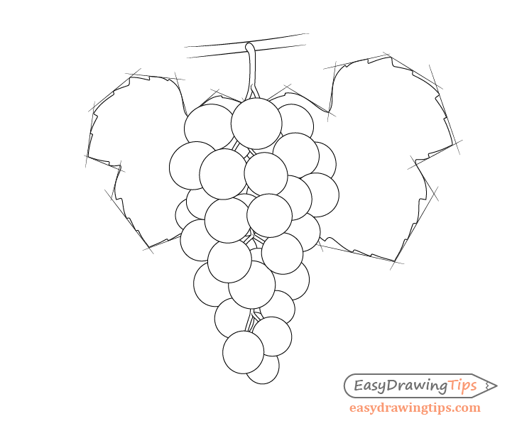 Grapes with leave shapes drawing