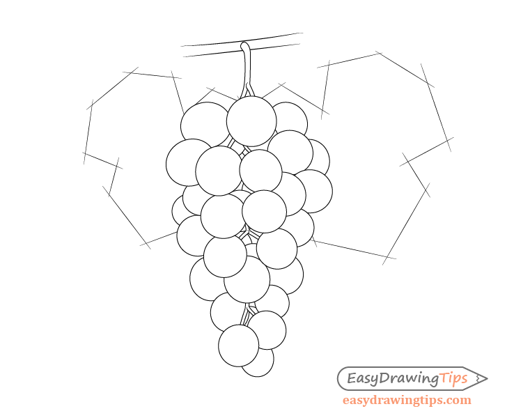 Grapes with leaves sketch drawing
