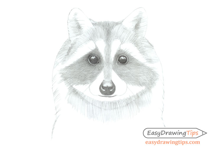 Raccoon face basic shading