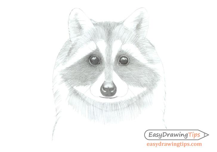 Raccoon face basic shading