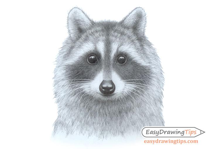 Raccoon face drawing