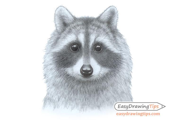 How to Draw a Raccoon Face Step by Step - EasyDrawingTips