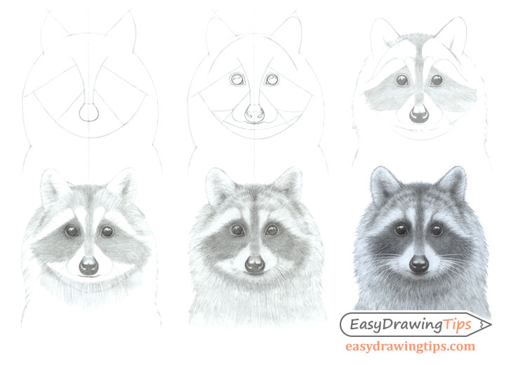 Raccoon face drawing step by step